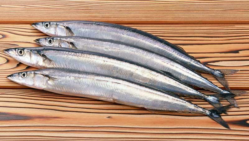Островные рыбаки лидируют по добыче сайры